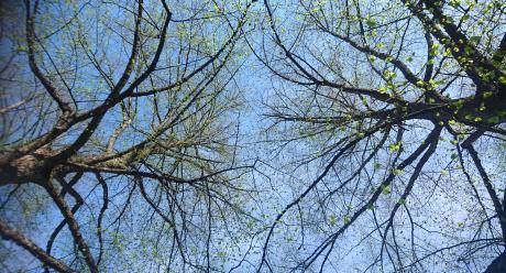 Taivaalle verkostona haarautuvat puut. Kuvaaja: Tiina Räihä