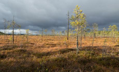 Kuva: Jukka Timonen