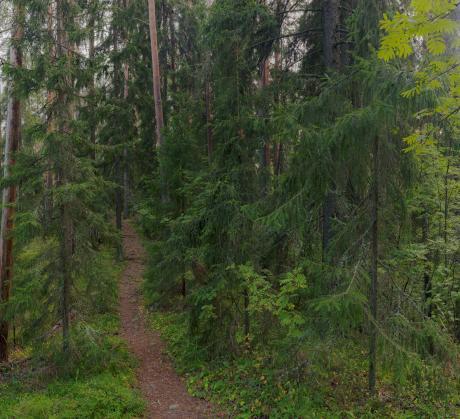 Kuva: Timo Kilpeläinen,  LUSTO – Suomen Metsämuseo