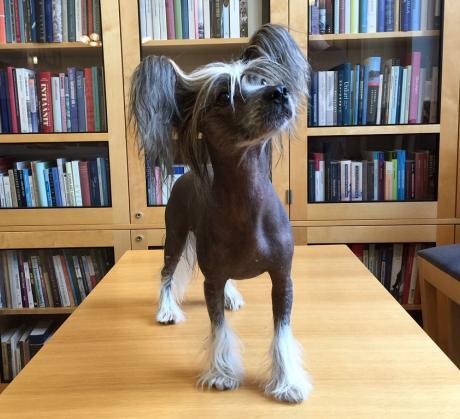Onko koira ihmisen tärkein kumppanilaji? Kuvassa Kivi